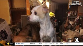 Adams Co. officials rescue animals from 'hoarding case'