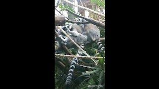 Monkeys and tortoises oh my!