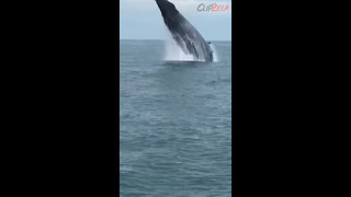 Amazing Encounter With Humpback Whale