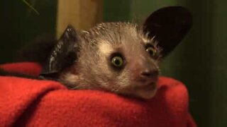 The strange but adorable side of the animal kingdom