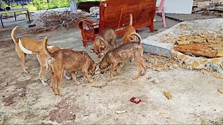 Hungry street dogs Life | Sick dog food crisis