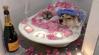 Couple goals: Adorable video of dog and cat sharing bath together