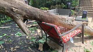 Tree falls and nearly hits mother