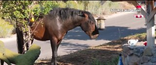 Wild horse spotted near Kyle Canyon