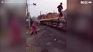 Senhora transporta tronco de madeira enorme!