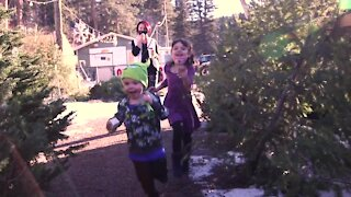 Discover Colorado with a true Christmas experience just outside of Denver at Tomari's