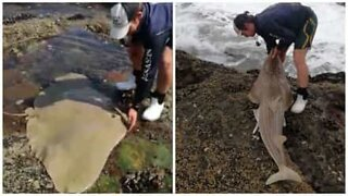 Hero rescues stranded fish from rocks