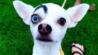 Rescue Dog With Unique Features Makes Him Look Like A James Bond Villain