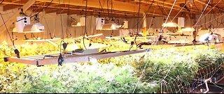 Illegal marijuana grow operation shut down