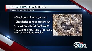 Keeping your home safe from critters