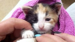 Motorcyclist saves panic-stricken kitten from busy road