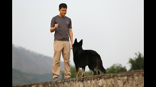 Dog training videos for beginners + New dog owner training