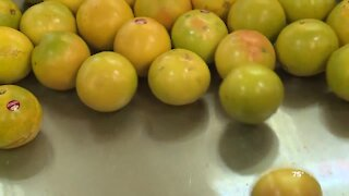 Citrus industry dealing with high tariffs