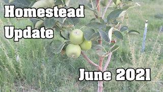 Homestead Update: June 2021