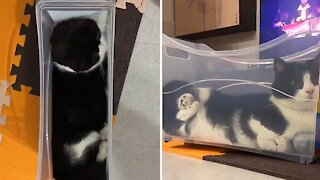 Typical cat chills out in very uncomfortable toy box