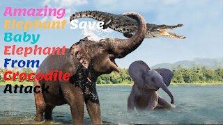 Amazing Elephant Save Baby Elephant From Crocodile Attack