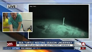 What to keep in mind as sea turtle nesting season continues in SWFL