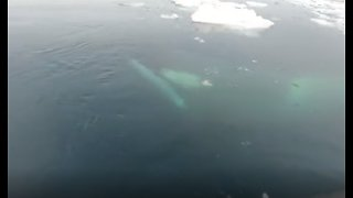 Cruisers Have Extremely Close Orca Encounter In Antarctica