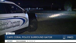 Cape Coral Police surround Gator