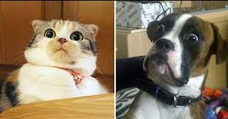 animal cutest moments