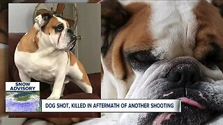 Woman's family pet killed by suspect running from police