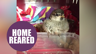 Animal-lover devastated after RSPCA takes away sparrow she rescued