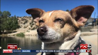 Kern County Animal Services steps behind North Complex Fire lines to rescue animals