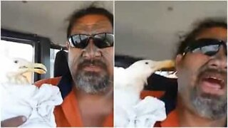 Hilarious seagull keeps is not happy with its rescuer