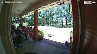 Deer smashes through house's glass door