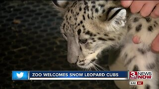 Zoo welcomes snow leopard cubs