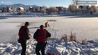 Cão é resgatado de lagoa congelada em Montana