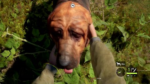 The Hunter: Call of the Wild - BLOODHOUNDS!
