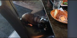 Restaurant owners face service dog struggle