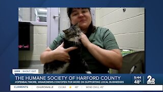 Cats up for adoption at the Humane Society of Harford County