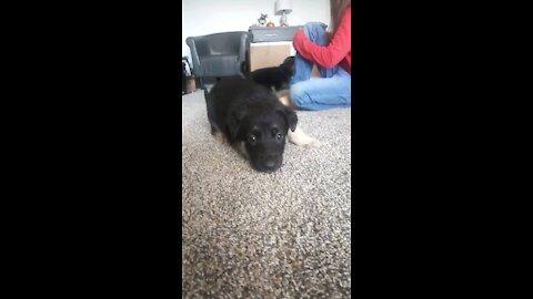 A Playful Pup