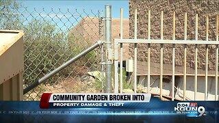 Rita Ranch Community Garden hit with vandalism, theft