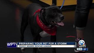 Prepare your pet for hurricane season