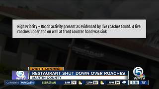 Dirty Dining: Roach activity temporarily shuts down 2 restaurants