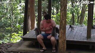 Jovem tem encontro desagradável com macacos!