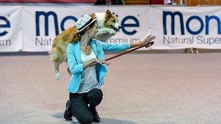 Prancing pooch! Dancing dog performs perfect catwalk strut