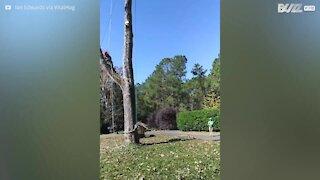 Ci vuole precisione per tagliare i rami di un albero