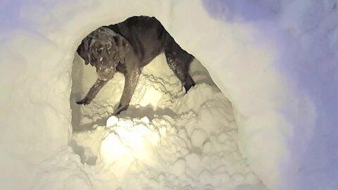 Winter-loving dog helps girls dig a snow fort