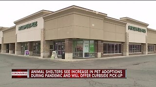 Local shelters report surge in pet adoptions, fostering