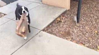Hund hjelper til med handleposene