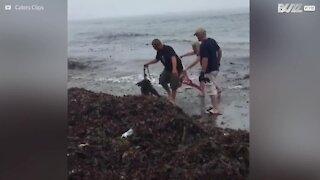 Famiglia salva cucciolo di foca da una rete da pesca