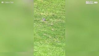 Homem faz amizade com coruja bebé