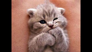 Cutest kittens in the world   Videos of funny cats
