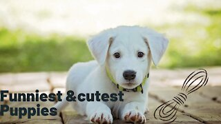 Cute baby animals videos compilation cutest moment of the the animals