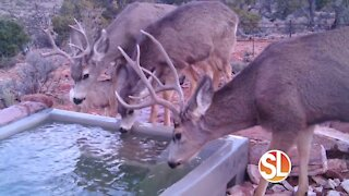 AZ Game & Fish needs YOUR help providing life-sustaining water for Arizona's wildlife