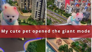 My pet dog opens a giant mode